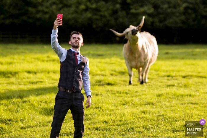 Hothorpe Hall, Northants, United Kingdom - Wedding guest taking a Cow Selfie at the reception