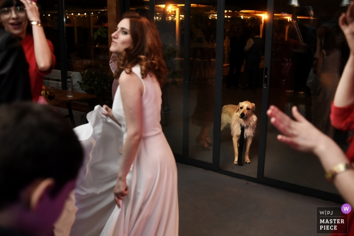 Romania Reception Venue photography of a dog at the party