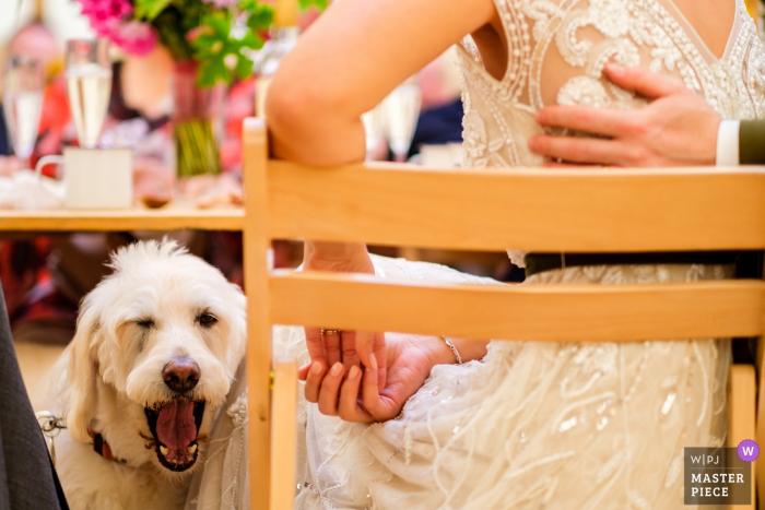 St Albans Hochzeitsempfang Fotografie | Hund unter dem Kopftisch