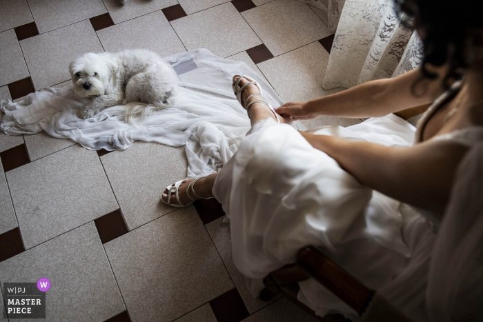 The bride get ready with a dog on her dress - reggio calabria wedding photography