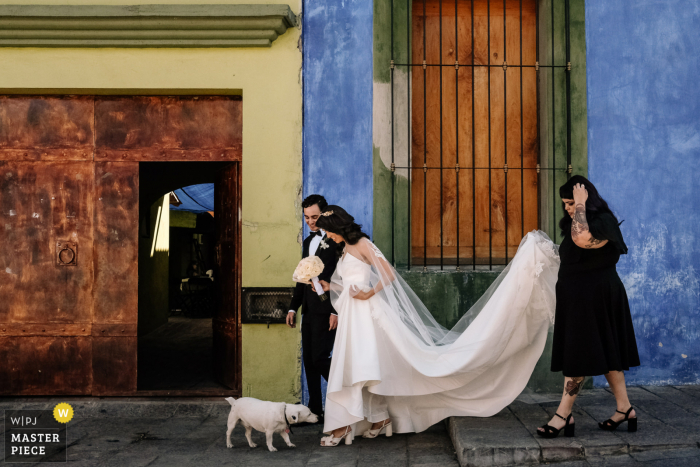 The bride is walking to the ceremony and is stopped by a dog who checks out her dress