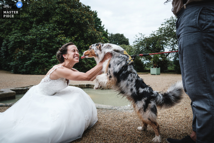 Dog wedding photo from the Brittany Reception venue - I wanna give mommy a big hug
