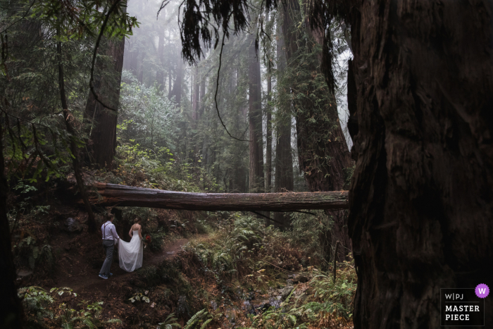 Wedding photo of the groom helping carry the bride's dress as they walk up a muddy path in the middle of a spectacular redwood forest in Marin County CA