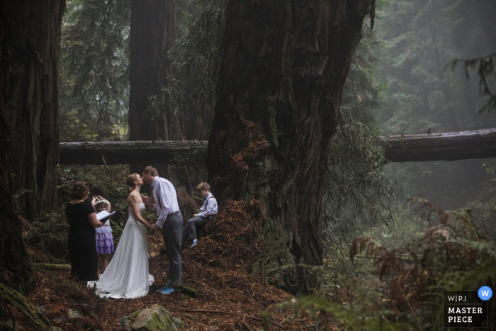 California wedding photography from A majestic Redwood grove near Mt. Tam in Marin County