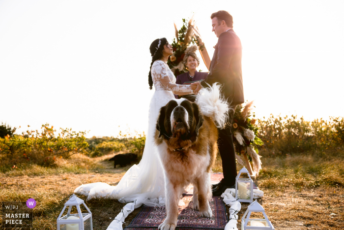 Massachusetts outdoor wedding photo from Chatham MA showing a dog trying to stop the ceremony