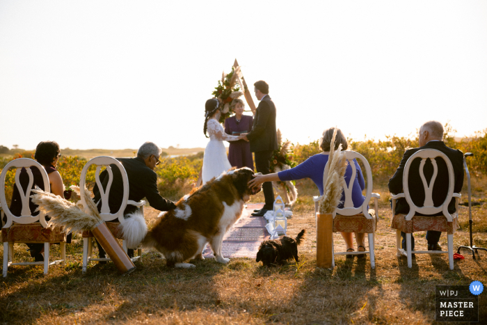 Massachusetts wedding photo from a Chatham MA private estate showing dogs during the ceremony