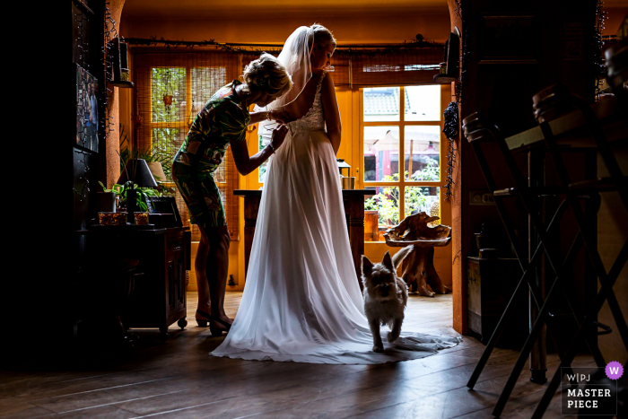 Amsterdam marriage preparation time award-winning picture capturing the dog walking on bride's dress during preparation. The world's best wedding image competitions are held by the WPJA
