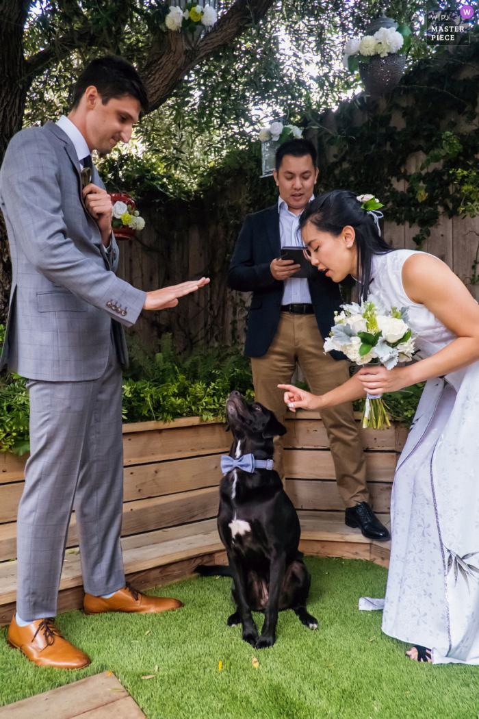 Venice, California marriage ceremony award-winning image showing The couple tells their dog (who is also a ring bearer) to sit and stay - from the world's best wedding photography competitions presented by the WPJA