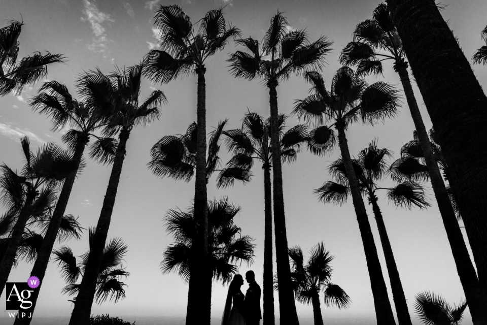 Paar Mersin Hilton Hotel Turkey, das unter Palmen in der Hintergrundbeleuchtung für Schwarzweiss-Hochzeitsporträts aufwirft
