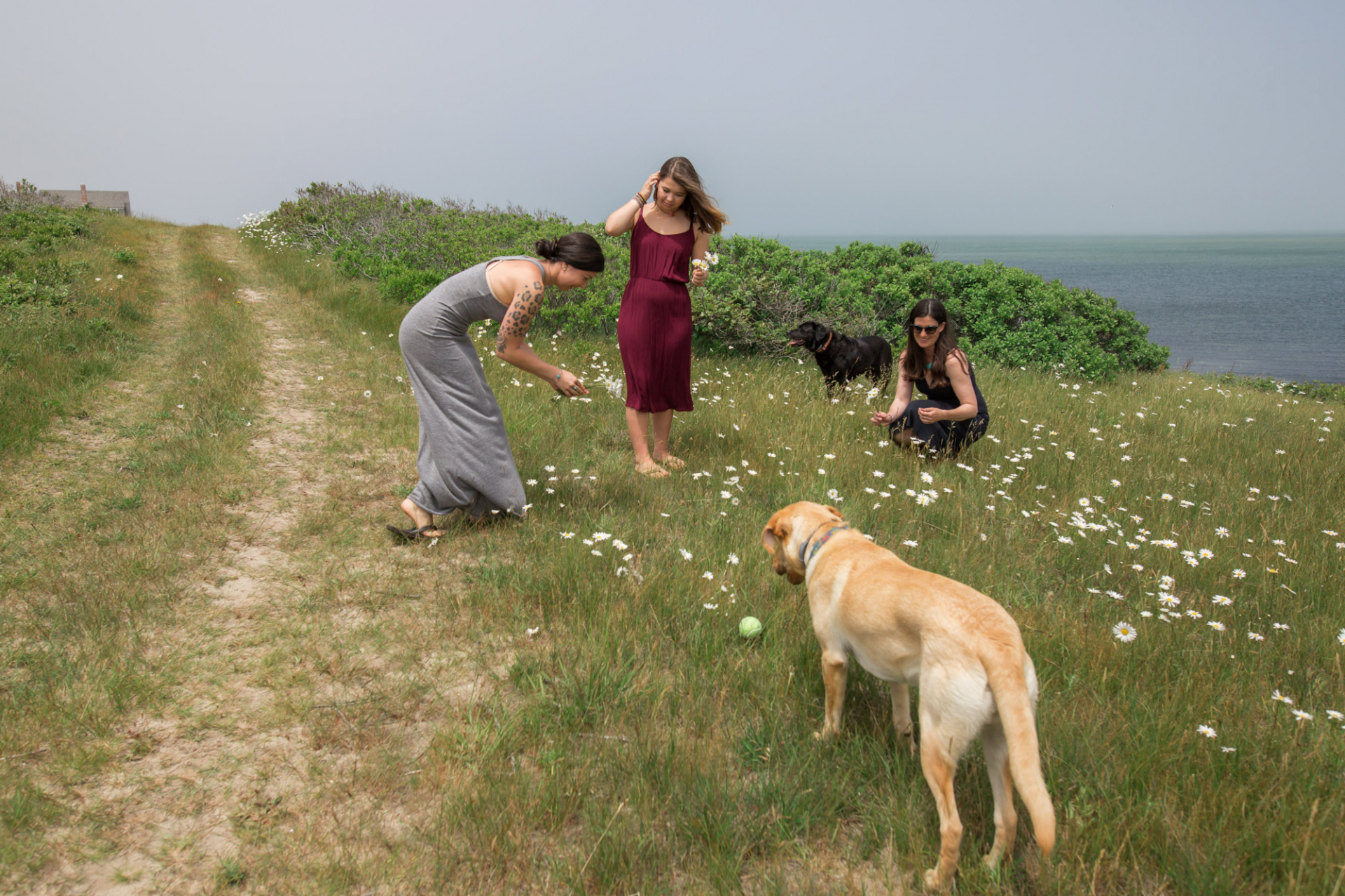 Picking Daisies for the elopement ceremony on Tuckernuck Island, MA