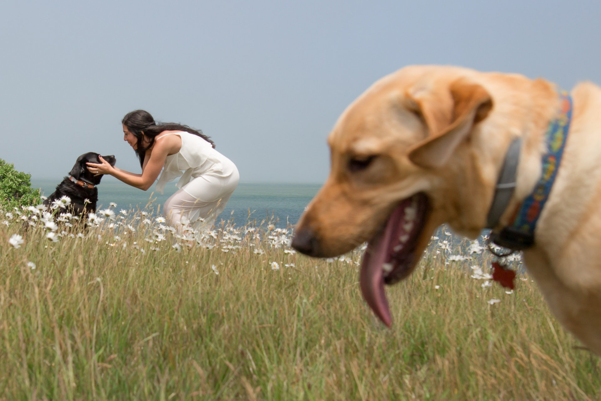 Bride shares a moment with her dog before the ceremony on an Island, MA