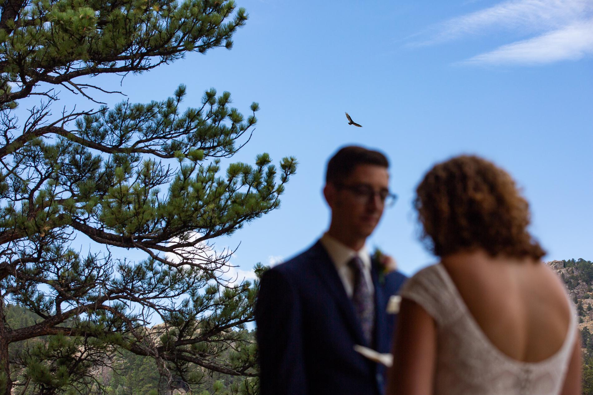Un vautour monte au-dessus alors qu'il entend les vœux de sa femme au Black Canyon Inn, Estes Park Colorado, USA