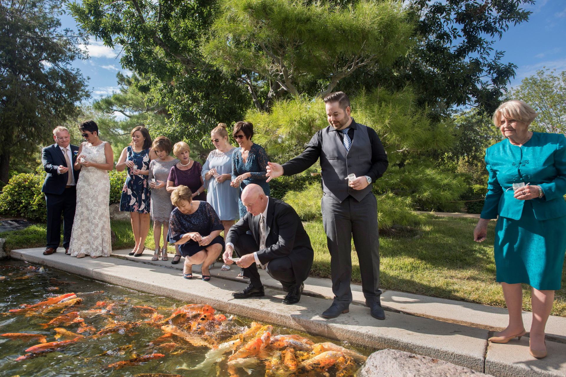 AZ Japanese Friendship Garden Elopement - Wedding Photography | The bride, groom, and their guests feed a frenzy of large koi fish for good luck at the koi pond in the garden