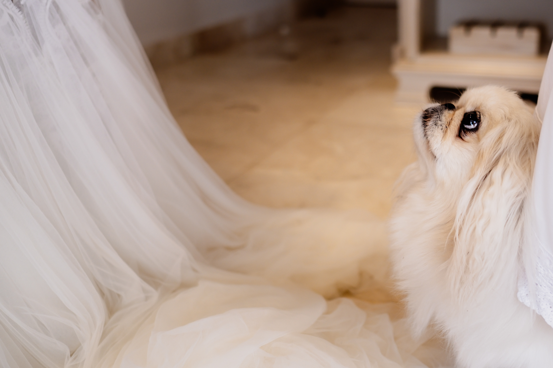South Africa Wedding Dog with Dress Photo | The bride's dog came all the way from Johannesburg for the big day