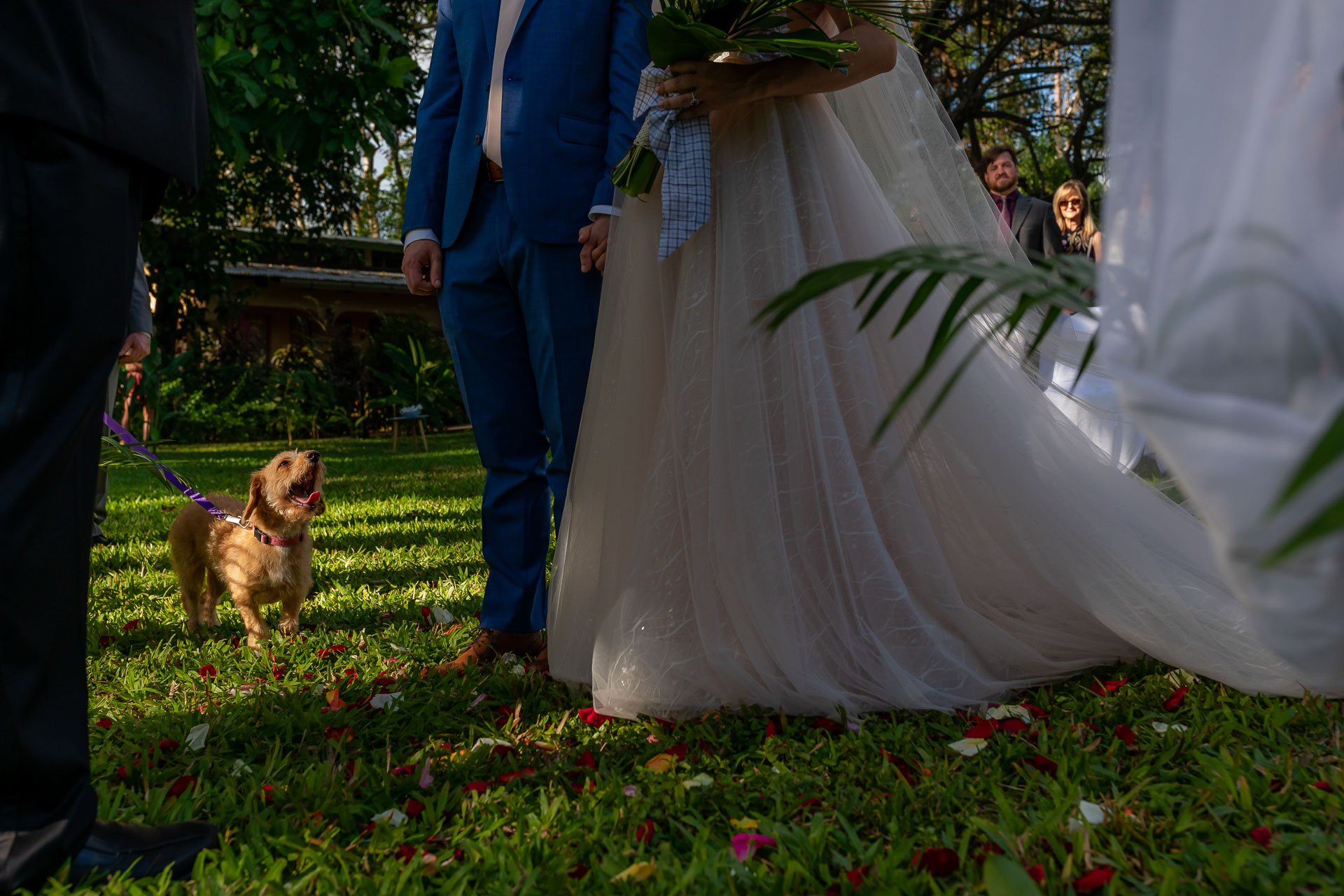 Costa Rica Outdoor Wedding Ceremony Photography   the couple asked the dog to be in the ceremony