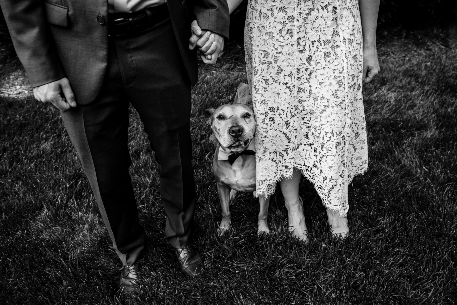 Backyard Elopement Photography | The newlywed's dog is certainly happy to have them both at home on this special day