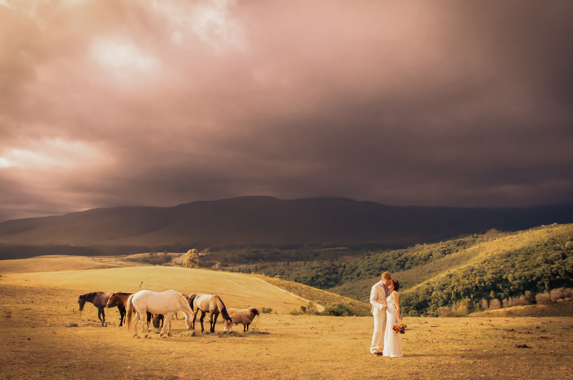 South Africa Outdoor Conservancy Elopement Photographer | A creative couple portrait of the newlyweds with the horses and sheep