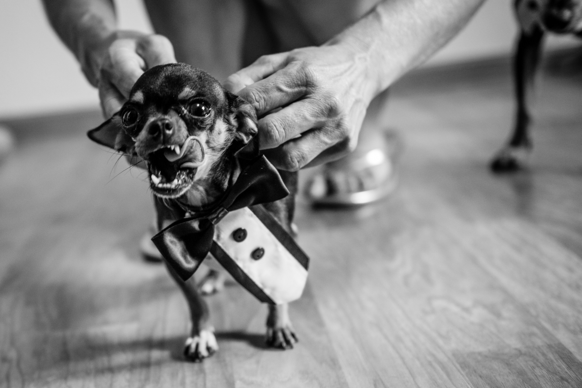 Elopement Photography in Parker, CO | Even the pup gets dressed for the occasion
