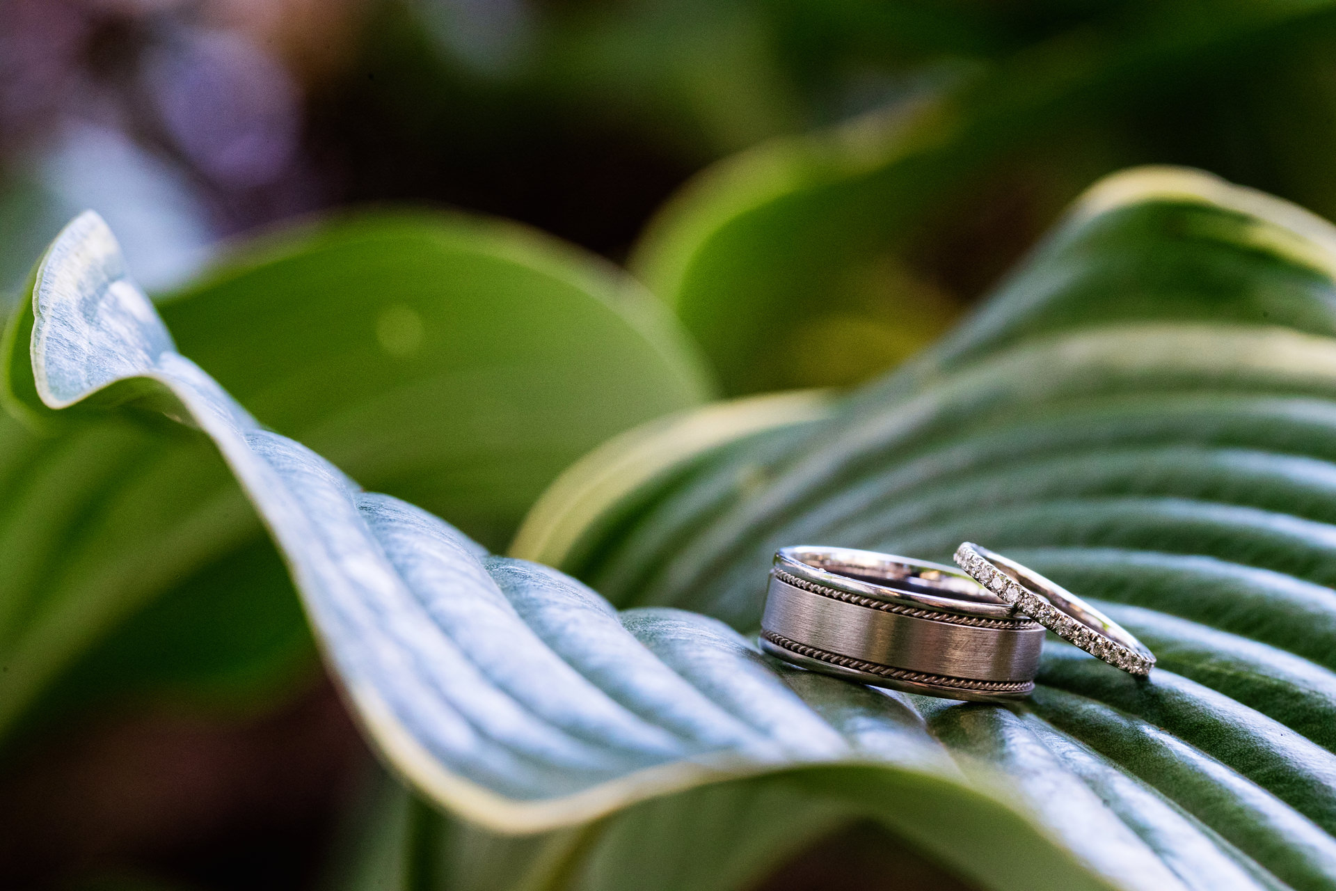Bound Brook, New Jersey Elopement Ring Detail Photo | A detail image of the couples wedding rings