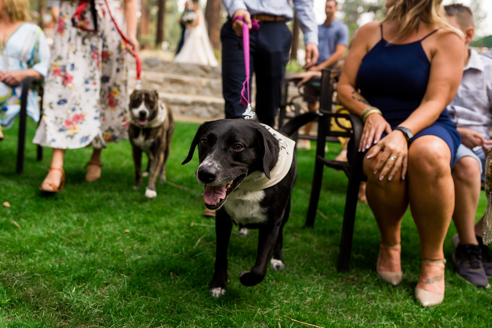 LTCC Demonstration Garden Wedding Image | The wedding party included their four-legged dog friends