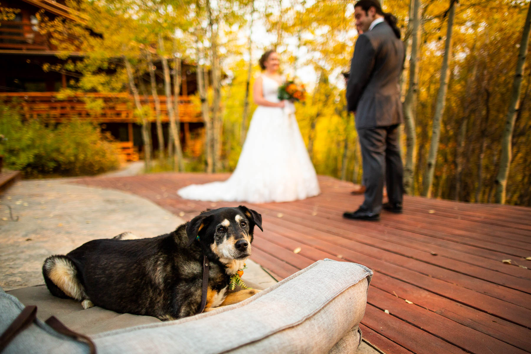 Wild Basin Lodge Wedding Photographers - Allenspark, CO | the dog and her dog bed came out to the ceremony site on the beautiful outdoor deck
