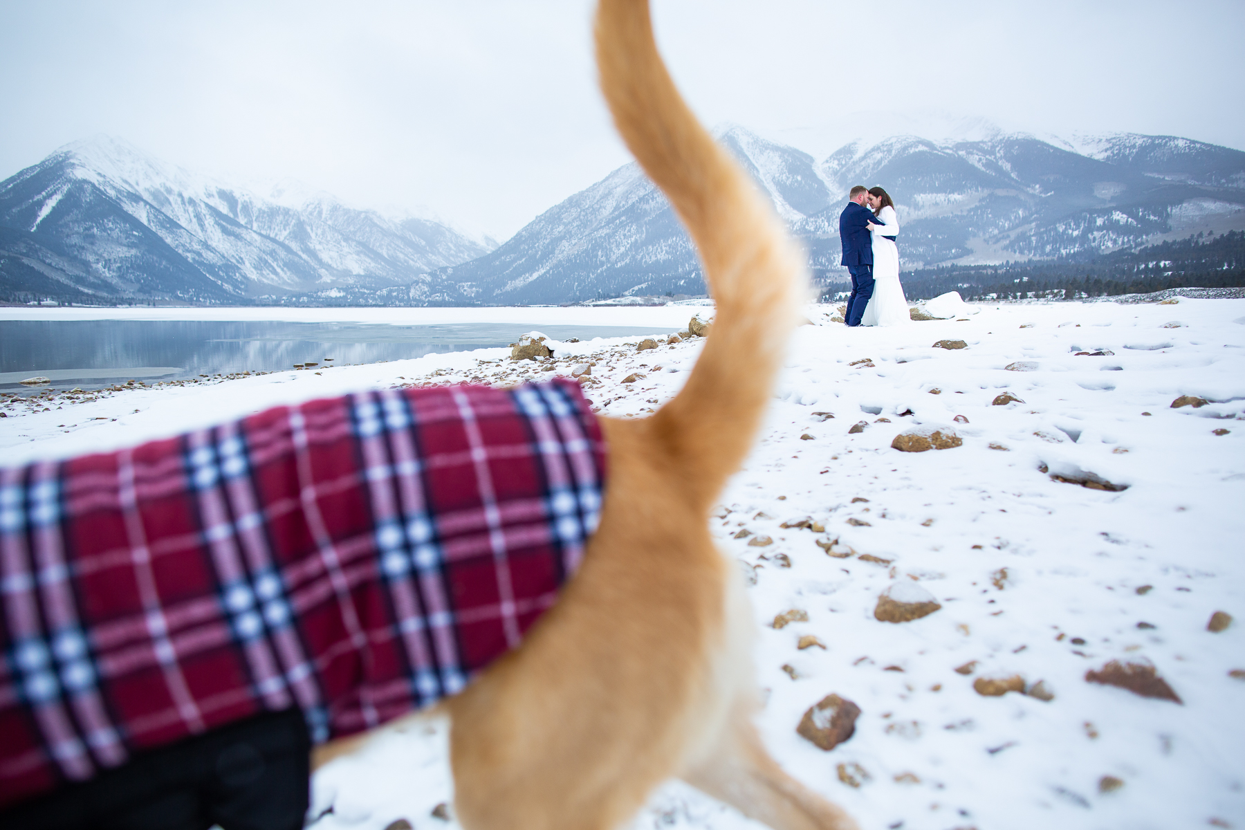 Winter Wedding Pictures from Twin Lakes, Colorado | The dog of honor, ran circles around the ceremony