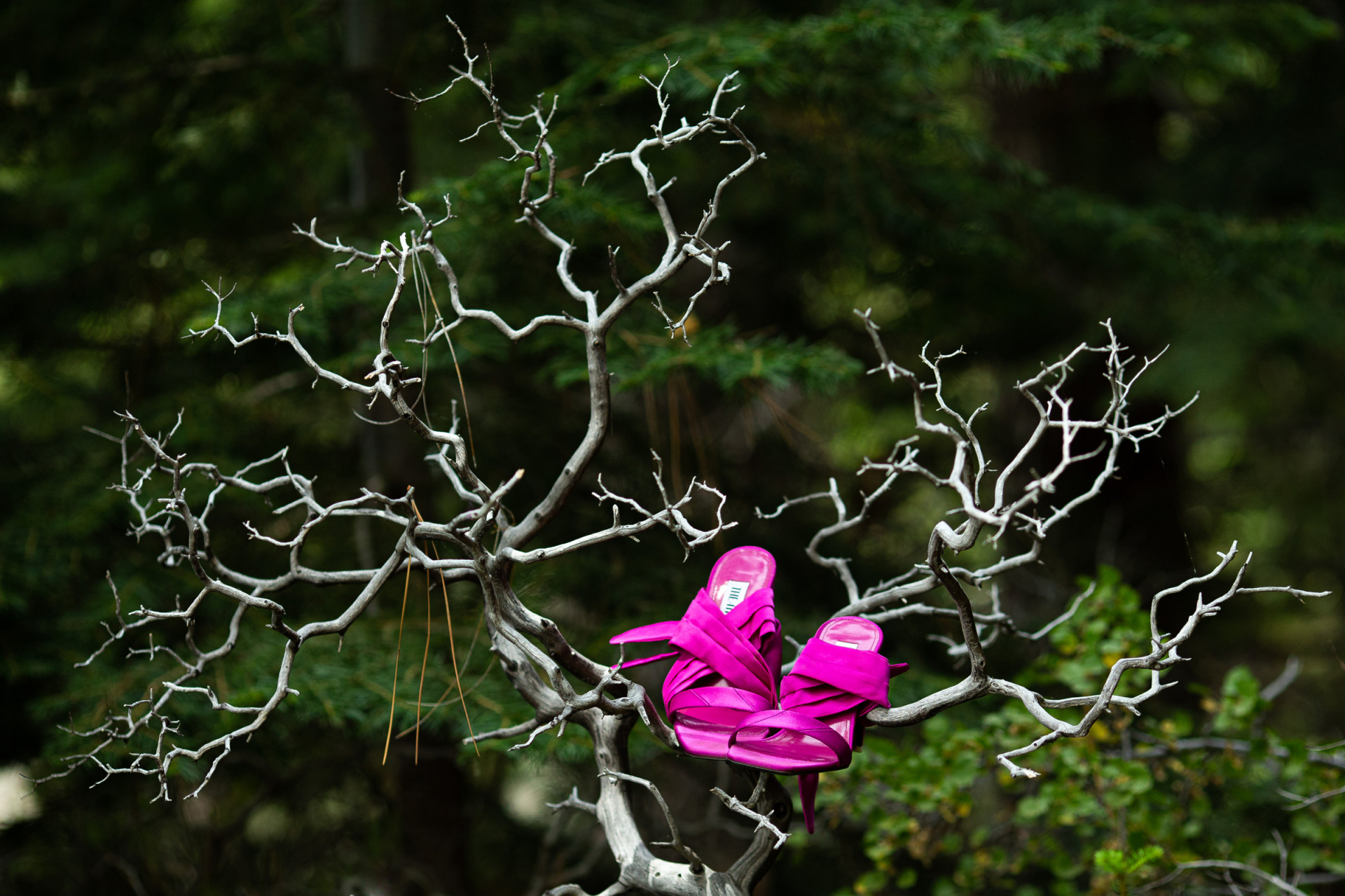 North Lake Tahoe Wedding Details Photography   The brides bright pink shoes perched in a dried out tree