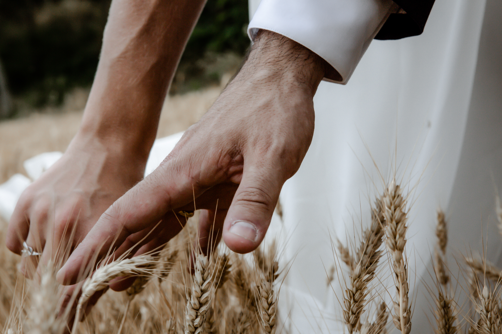 San Demetrio Wheat Fields Detail Pic, Cesena | In between the ceremony and the reception, the couple took time to stroll